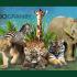 4 Séjours pour 6 personnes au Zoo de Granby