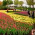Forfait Festival des tulipes à Ottawa