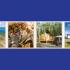 Gagnez un voyage pour 4 au Yukon (Valeur de 13 378$)