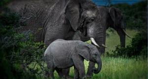 Gagnez des voyages familiaux au Kenya