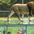 Gagnez votre séjour Parc Safari