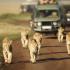 Gagnez un voyage pour 4 personnes au Kenya (Valeur de 25.980$)
