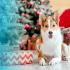 Gagnez Un paquet-cadeau personnalisé de chez Mondou